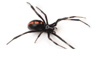 7 Tips To Keep Your Home Spider-Free