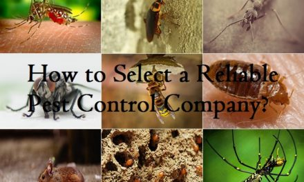 How to Select a Reliable Pest Control Company?