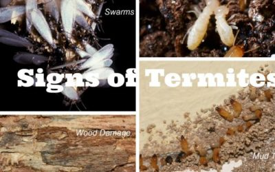 Signs of Infestation of Termites in your Property