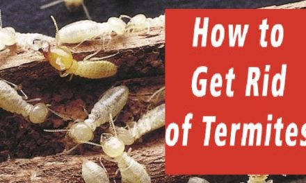How to Get Rid of Termites in Melbourne