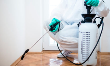 How ToDeal With Pest Infestation In Office