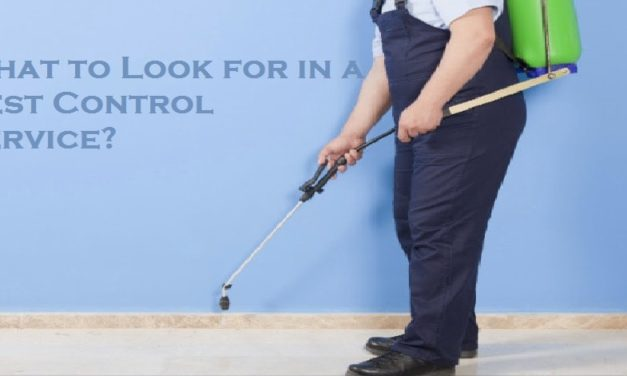 What to Look for in a Pest Control Service?