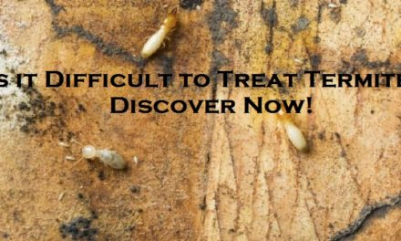 Is it Difficult to Treat Termites? Discover Now!