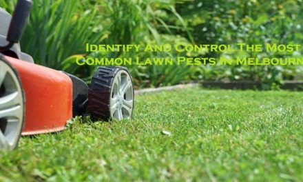 Identify And Control The Most Common Lawn Pests In Melbourne