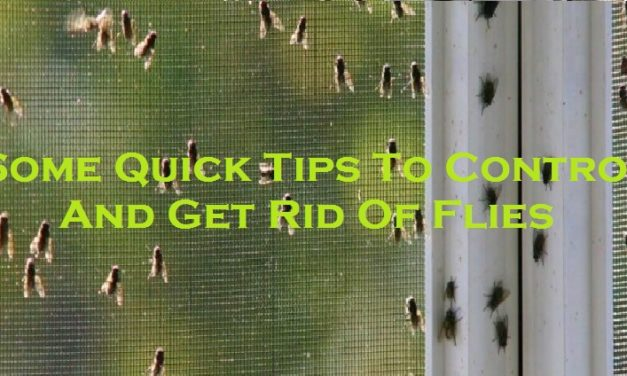 Some Quick Tips To Control And Get Rid Of Flies