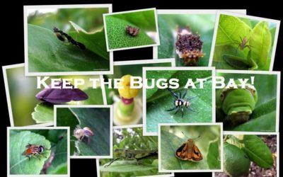 Keep the Bugs at Bay!