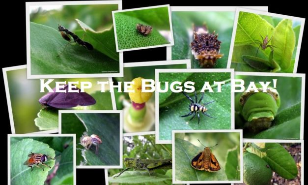 Keep the Bugs at Bay!