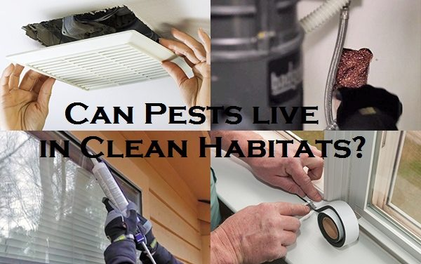 Can Pests live in Clean Habitats?