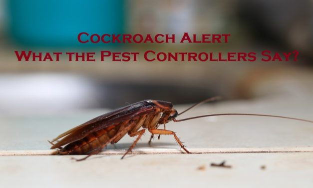 Cockroach Alert – What the Pest Controllers Say?