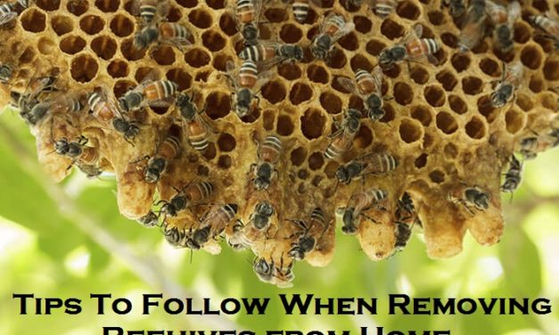 Tips To Follow When Removing Beehives from Home