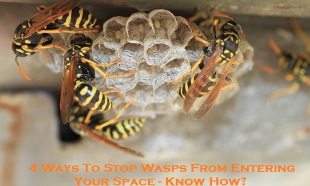 4 Ways To Stop Wasps From Entering Your Space – Know How?