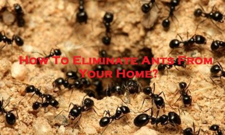 How To Eliminate Ants From Your Home?