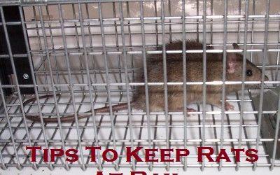 Tips To Keep Rats At Bay
