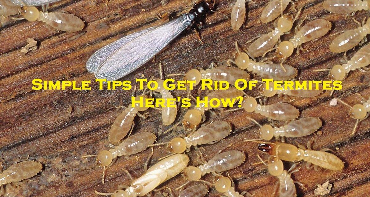 Simple Tips To Get Rid Of Termites – Here's How?