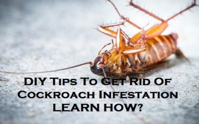 DIY Tips To Get Rid Of Cockroach Infestation – Learn How?