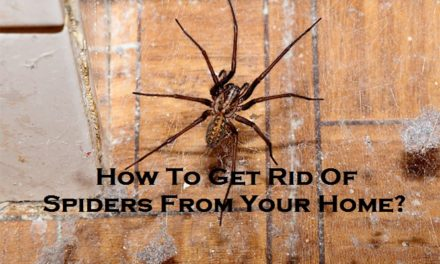 How To Get Rid Of Spiders From Your Home?