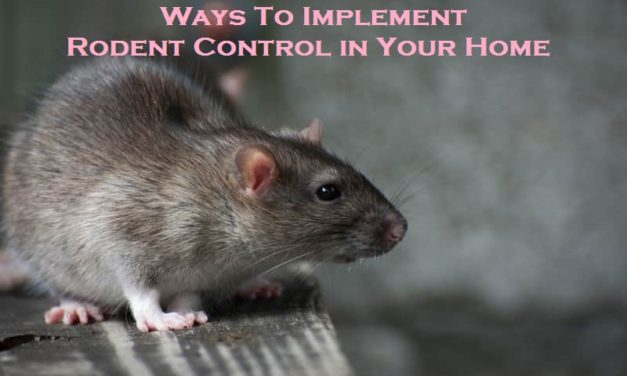 Ways To Implement Rodent Control in Your Home