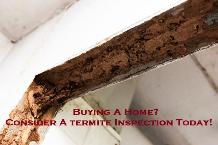 Buying A Home? Consider A termite Inspection Today!