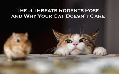 The 3 Threats Rodents Pose and Why Your Cat Doesn't Care