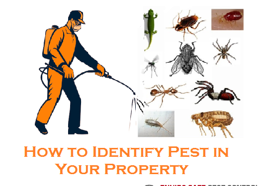 How to Identify Pest in Your Property