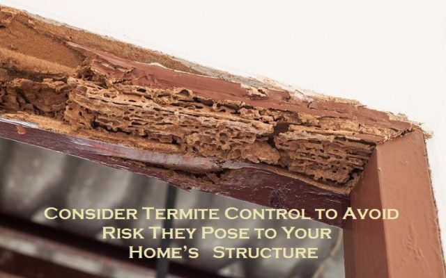 Consider Termite Control to Avoid Risk They Pose to Your Home's Structure