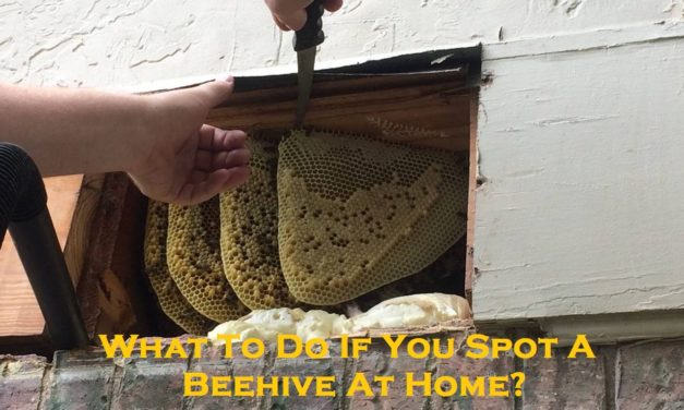 What To Do If You Spot A Beehive At Home?