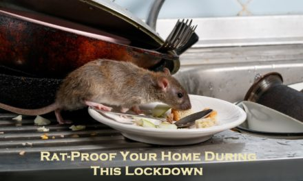 Rat-Proof Your Home During This Lockdown