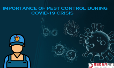 Importance Of Pest Control During COVID-19 Crisis
