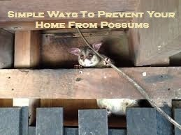 Simple Ways To Prevent Your Home From Possums