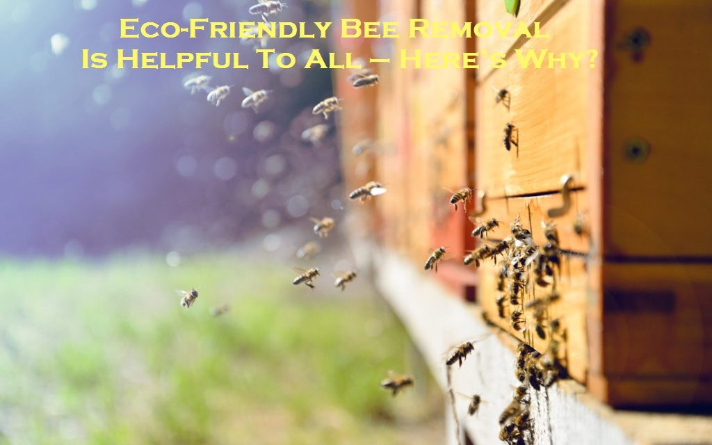 Eco-Friendly Bee Removal Is Helpful To All – Here's Why?