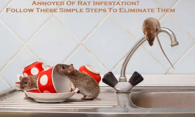 Annoyed Of Rat Infestation? Follow These Simple Steps To Eliminate Them