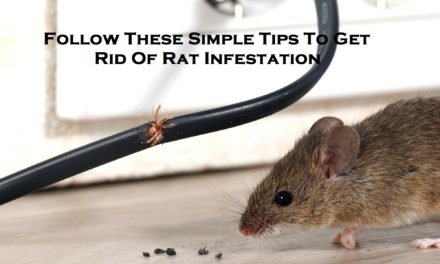 Follow These Simple Tips To Get Rid Of Rat Infestation