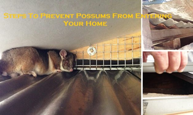 Steps To Prevent Possums From Entering Your Home