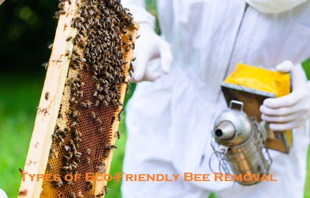 Types of Eco-Friendly Bee Removal