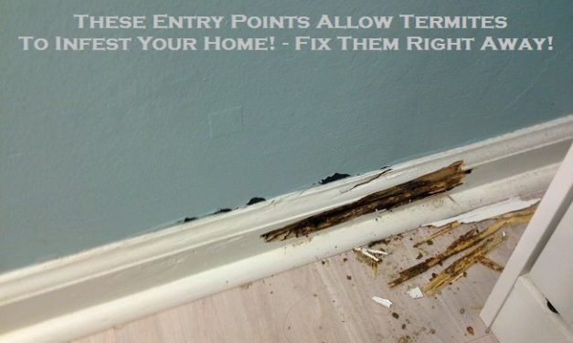 These Entry Points Allow Termites To Infest Your Home! – Fix Them Right Away!