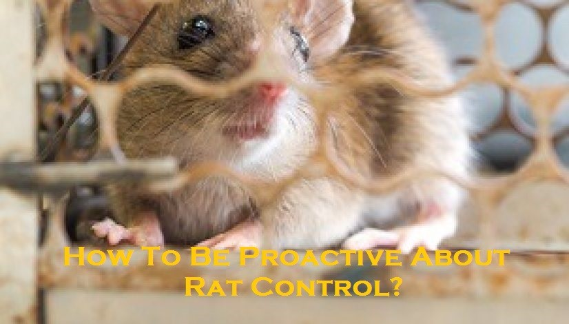 How To Be Proactive About Rat Control?
