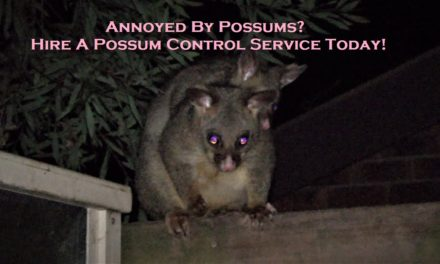 Annoyed By Possums? Hire A Possum Control Service Today!