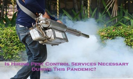 Is Hiring Pest Control Services Necessary During This Pandemic?
