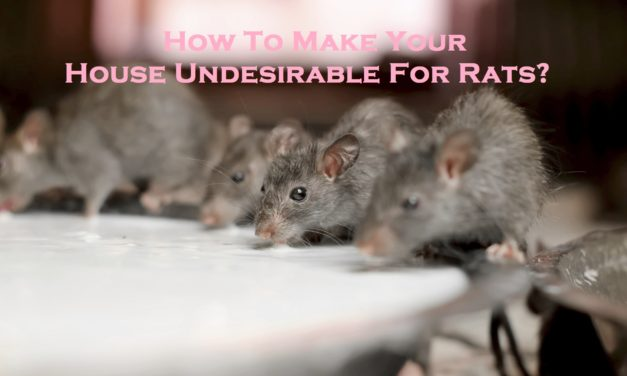 How To Make Your House Undesirable For Rats?