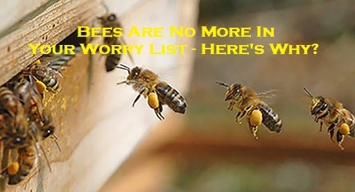 Bees Are No More In Your Worry List – Here's Why?