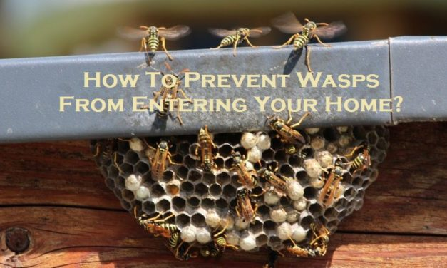 How To Prevent Wasps From Entering Your Home?