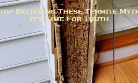 Stop Believing These Termite Myths – It's Time For Truth