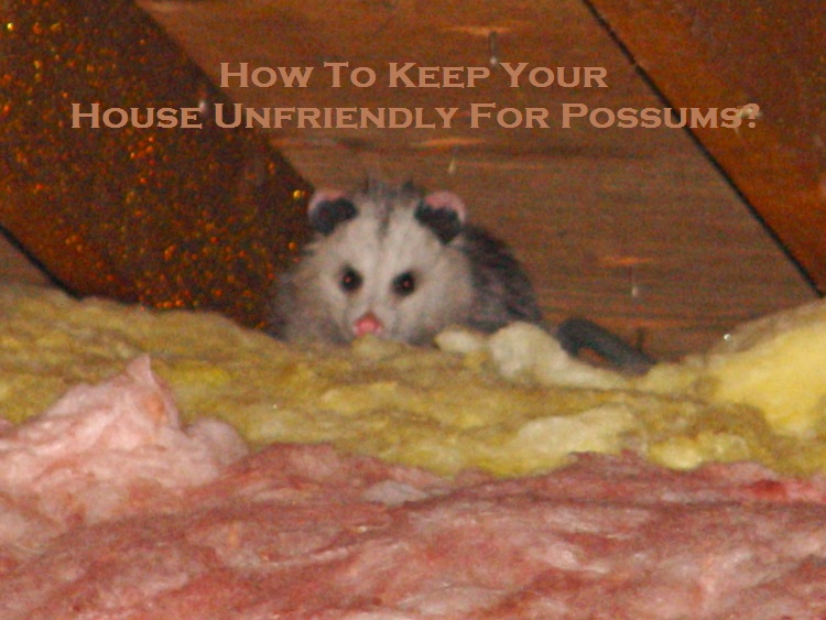 How To Keep Your House Unfriendly For Possums?