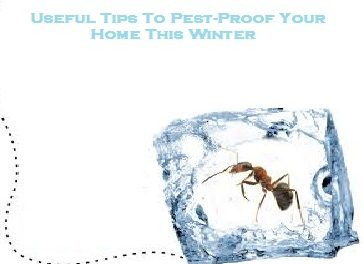Useful Tips To Pest-Proof Your Home This Winter