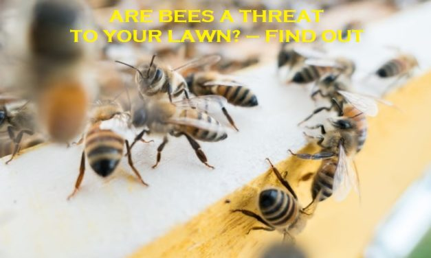 Are Bees A Threat To Your Lawn? – Find out