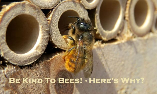 Be Kind To Bees! – Here's Why?