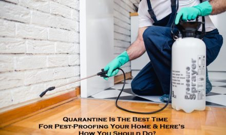 Quarantine Is The Best Time For Pest-Proofing Your Home & Here's How You Should Do?