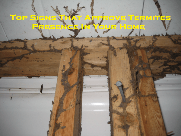 Top Signs That Approve Termites Presence In Your Home