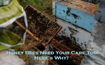 Honey Bees Need Your Care Too! – Here's Why?