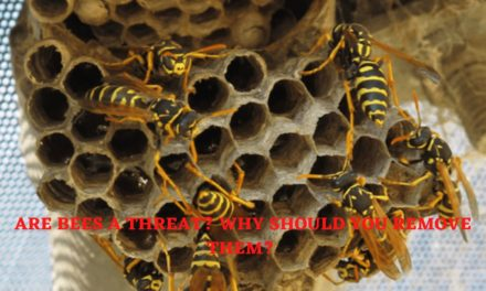 Are Bees A Threat? Why Should You Remove Them?